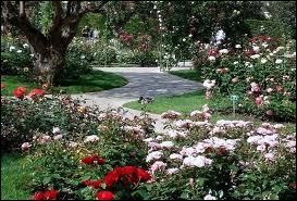 Quelles sont les fleurs que l'on peut admirer dans le Parc paysager de Fontvieille à Monaco ?
