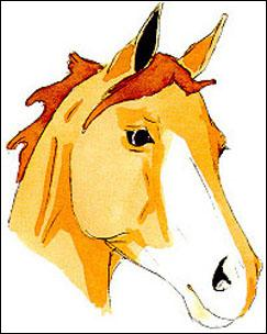 quizz galop 2 ffe quiz chevaux galop 2. Black Bedroom Furniture Sets. Home Design Ideas