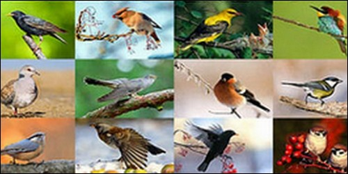Comment s'appelle l'étude des oiseaux ?