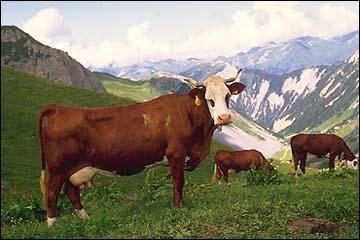 comment s'appelle la vache dans mickey