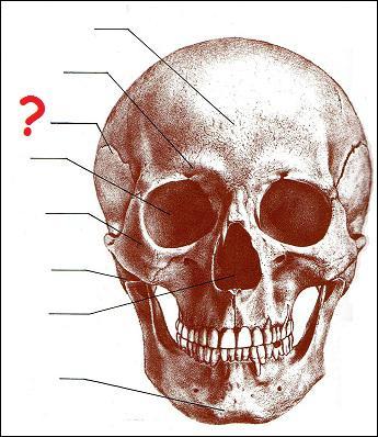 Quel est le nom de la partie du crâne humain désignée par un point d'interrogation ?