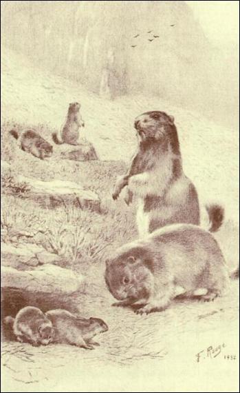 Combien de marmottes s'ébattent dans cet alpage ? (CLIQUEZ sur l'image)