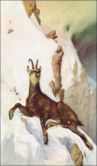 Frédéric Rouge fait aussi oeuvre de naturaliste en peignant les animaux montagnards. Quel animal est ici à l' 'Agonie dans les Alpes' ?