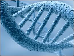 Quelle base azotée des nucléotides de la molécule d'ADN est absente dans une molécule d'ARN ?