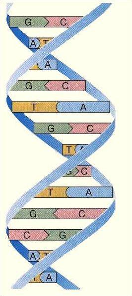 La génétique entre vos mains