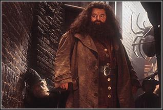 Quelle age a Hagrid dans le film ?