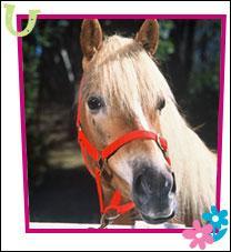 Quizz grand galop quiz chevaux equitation photos - Jeux de poney qui saute ...