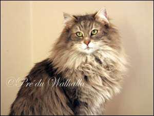 Quizz les chats quiz chats - A quel age couper les griffes d un chat ...