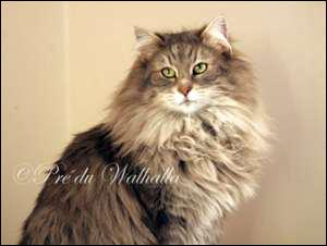 Quizz Les chats - Quiz Chats