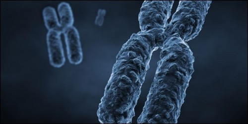 Combien l'homme a-t-il de paires de chromosomes ?