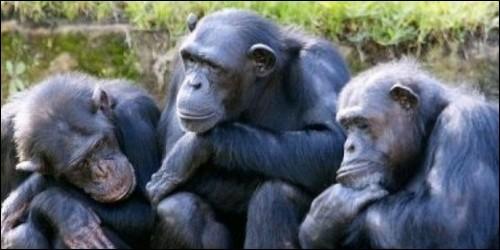 Les singes sont quadrumanes.