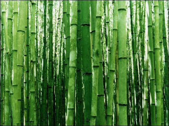 A quel animal le bambou sert de nourriture et d'habitat ?