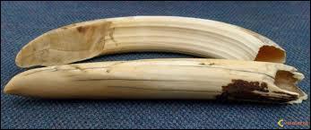 Le huitième fait plus de 200 morts par an, par la faute de dents très aiguisées, regardez soigneusement la photo !
