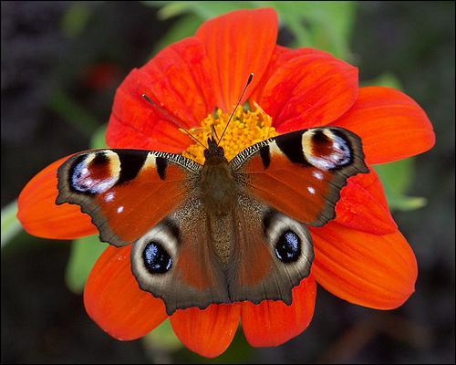 Quizz les insectes pour les petits quiz petits insectes - Animal qui mange les fourmis ...
