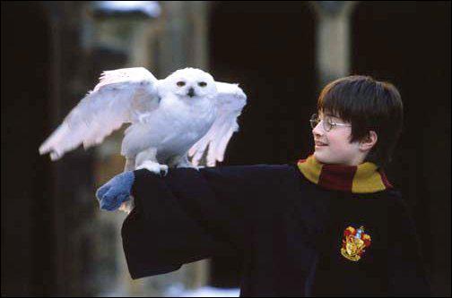 Comment s'appelle la chouette de Harry ?