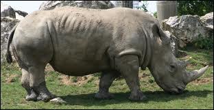 Partie 2 (tome 2) : quel rhinocéros qu'ils avaient déjà croisé dans le tome 1 Dodji et Leïla retrouvent-ils ?