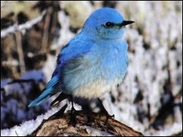 Comment dit-on ' oiseau ' en anglais ?