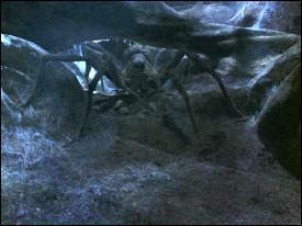Comment s'appelle l'araignée de Hagrid ?