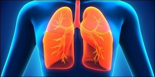 Combien l'être humain possède-t-il de poumons ?