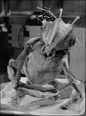 En 1967, le Britannique Roy Ward Baker mêle habilement horreur et science fiction dans un film de Martiens dont John Carpenter a dit qu'il était son film de référence. C'est :