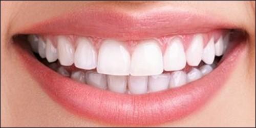 Quels sont les dents qui tranchent ?