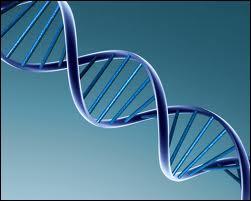 Biologie : que signifie l'abréviation 'ADN' ?