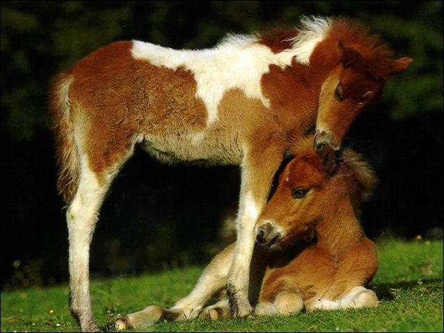 Où mesure-t-on un cheval ?