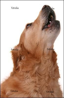 Le chien :