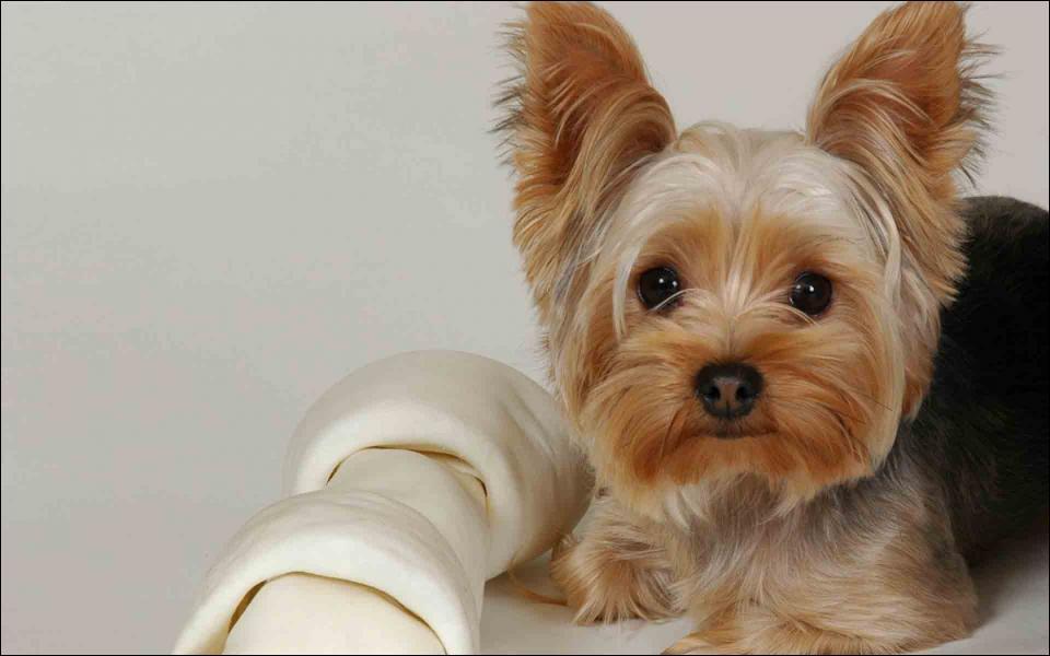 Quel aliment est mortel pour le chien ?
