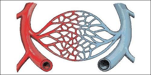 Comment s'appellent les plus fins des vaisseaux sanguins ?