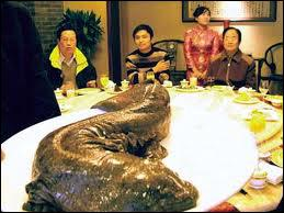 Cette énorme créature n'est pas un poisson, c'est une salamandre géante, on la trouve ...