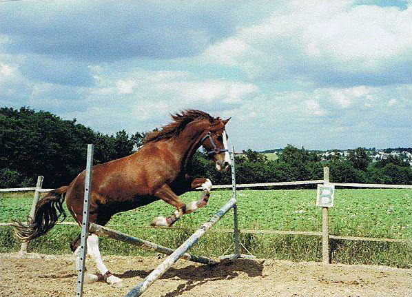 Noms des obstacles en équitation