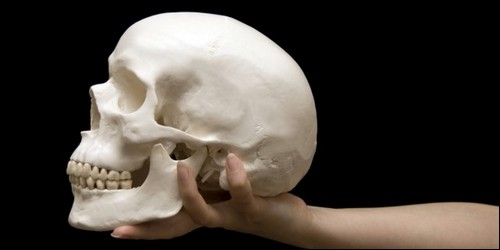 De combien d'os un crâne humain se compose-t-il ?