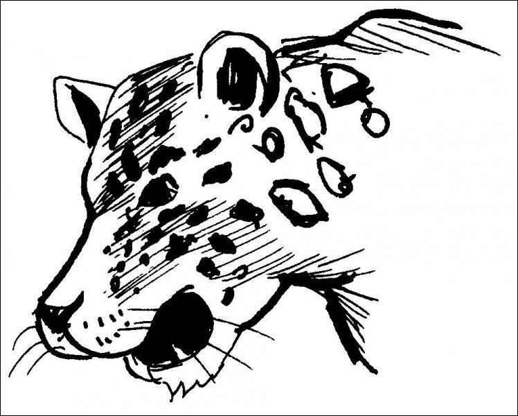 Comment se nomme le léopard qui se trouve dans la Grande Maison ?