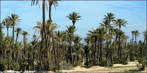 Comment s'appelle une plantation de palmiers ?