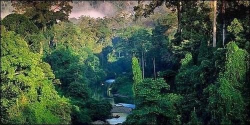 Combien d'espèces de plantes environ poussent dans la jungle amazonienne ?