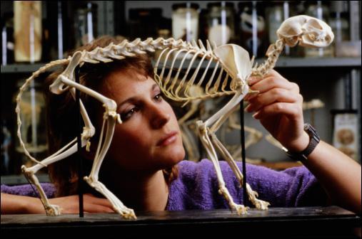 De combien d'os le squelette du chat est-il composé ?