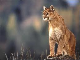Quelle appellation ne convient pas pour cet animal ?