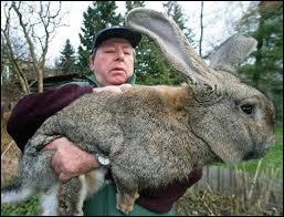 Cet homme tient un animal dans ses bras, mais qu'est-ce ?