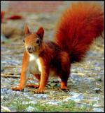 Quelle est la couleur de cet écureuil ?
