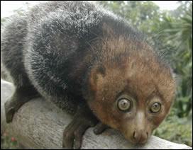 Quel est cet animal?