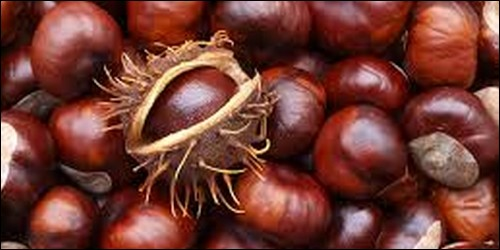 Quel arbre produit le marron comestible ?