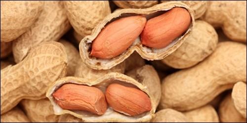 Les cacahuètes mûrissent dans un arbre.