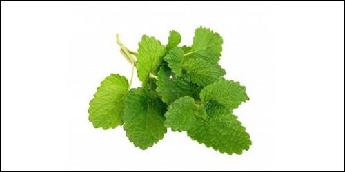 Comment s'appelle cette plante herbacée vivace, dans la famille des Labiées, ayant pour propriété médicale de calmer les nerfs et l'herpès, entre autres ?
