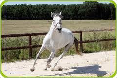 quizz les chevaux quiz chevaux