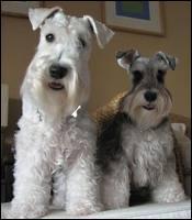 Quelle est la race de ces chiens ?