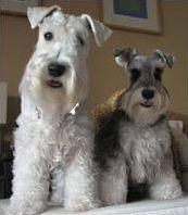 Les chiens de race en photos