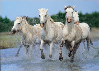 De quelle couleur sont ces chevaux ?