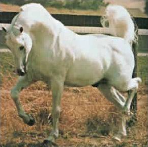 Galop 1 : les robes des chevaux