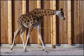 Comment s'appellent ceux qui travaillent dans les zoos ?